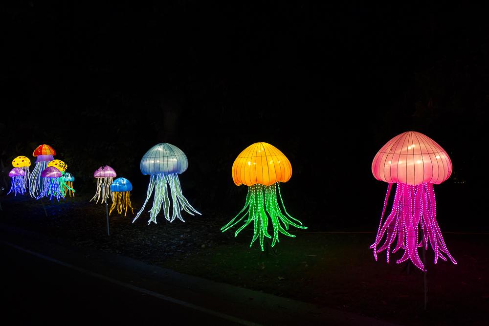 Moonlight Forest 洛杉磯植物園燈飾展覽 3_圖1-9