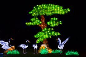 Moonlight Forest 洛杉矶植物园灯饰展览 5