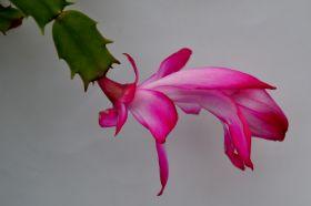 最近在温室拍摄的花 (1)