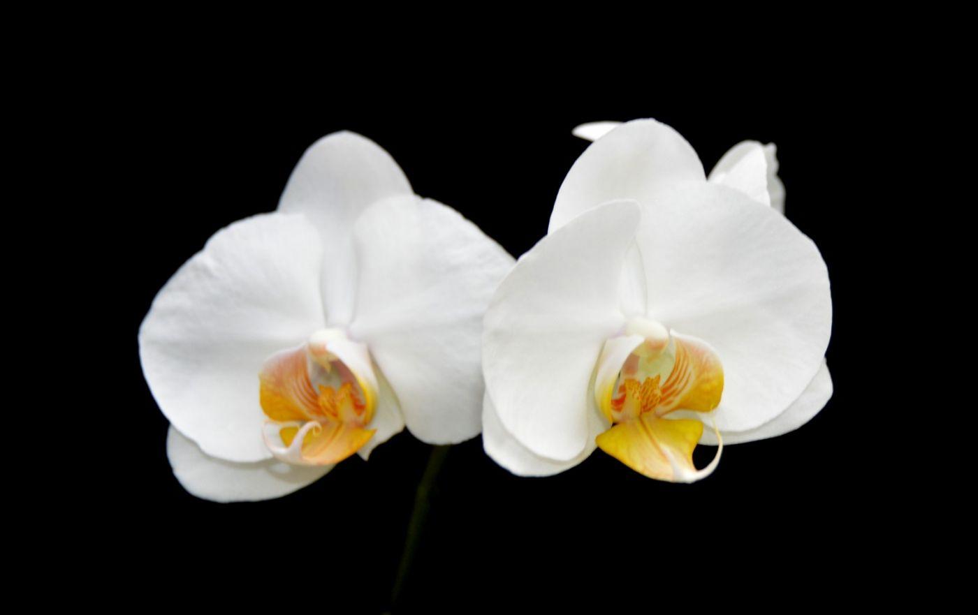 最近在溫室拍攝的花 (1)_圖1-2