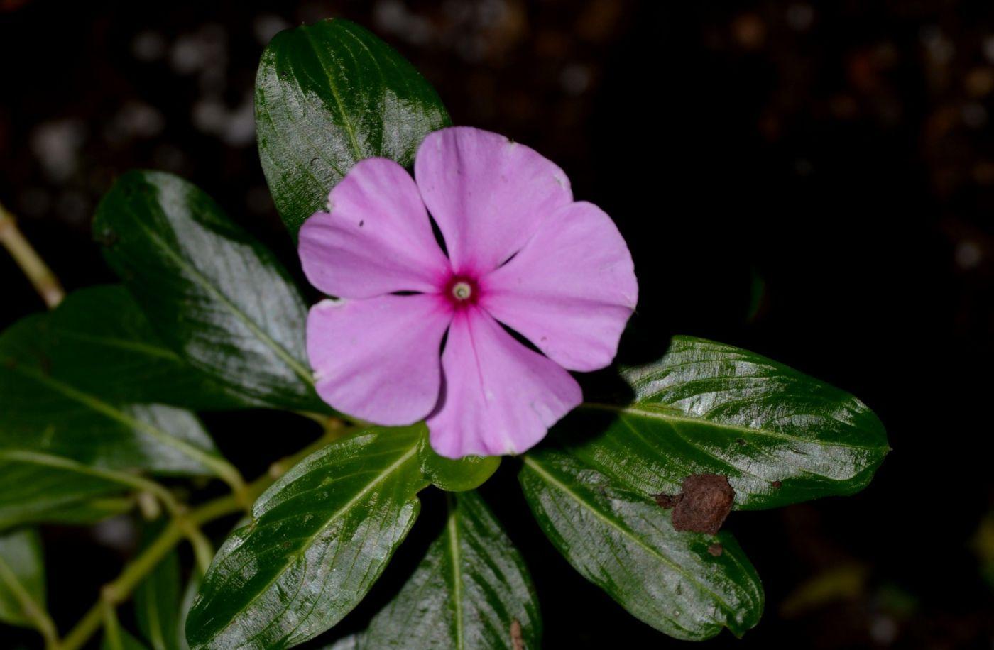 最近在溫室拍攝的花 (1)_圖1-3