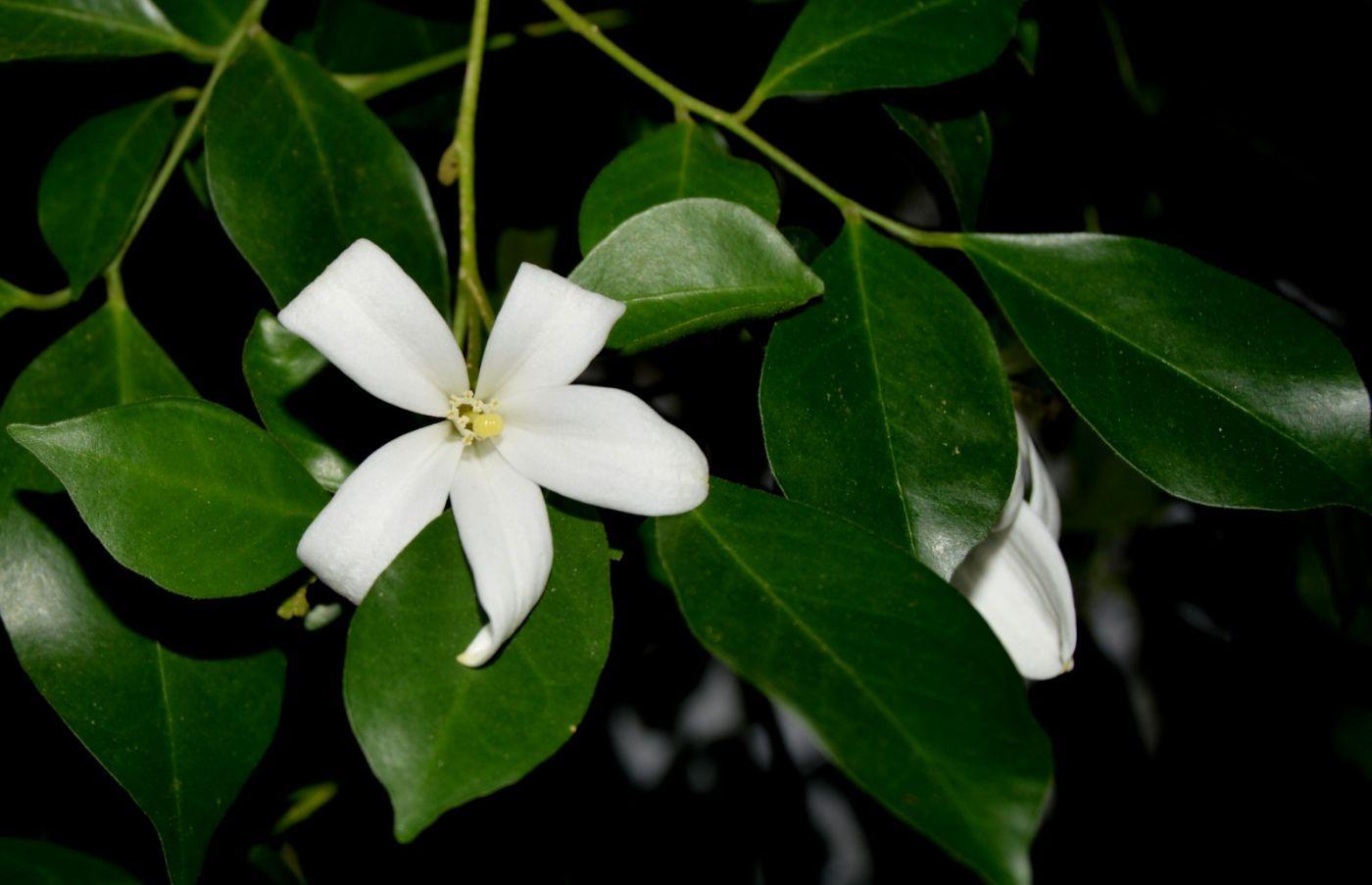 最近在溫室拍攝的花 (1)_圖1-5