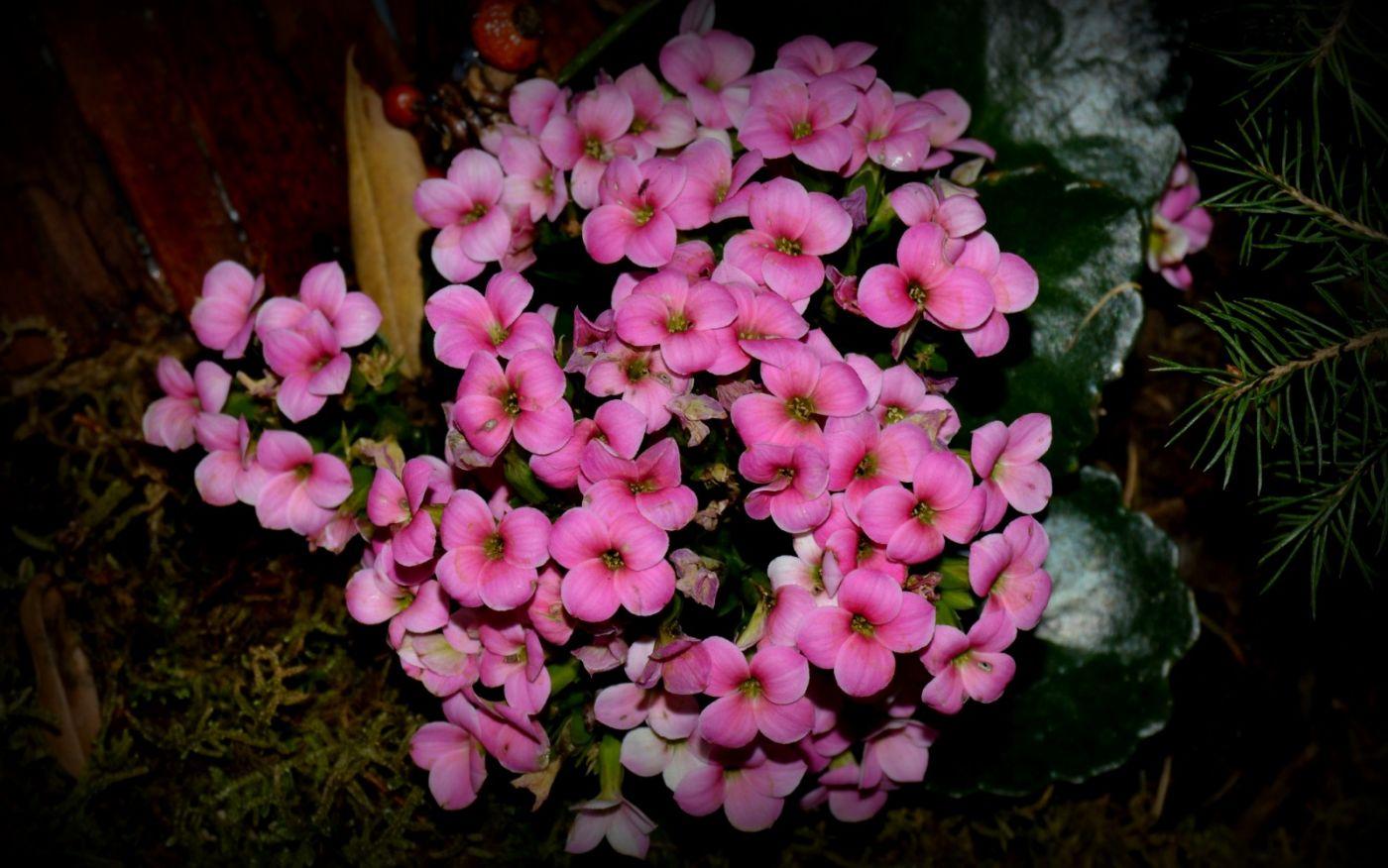 最近在溫室拍攝的花 (1)_圖1-9