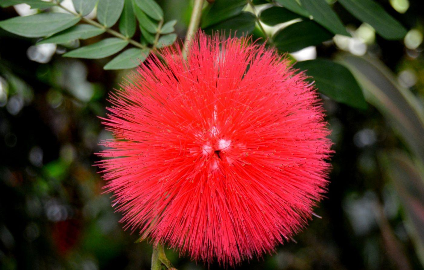 最近在溫室拍攝的花 (1)_圖1-10