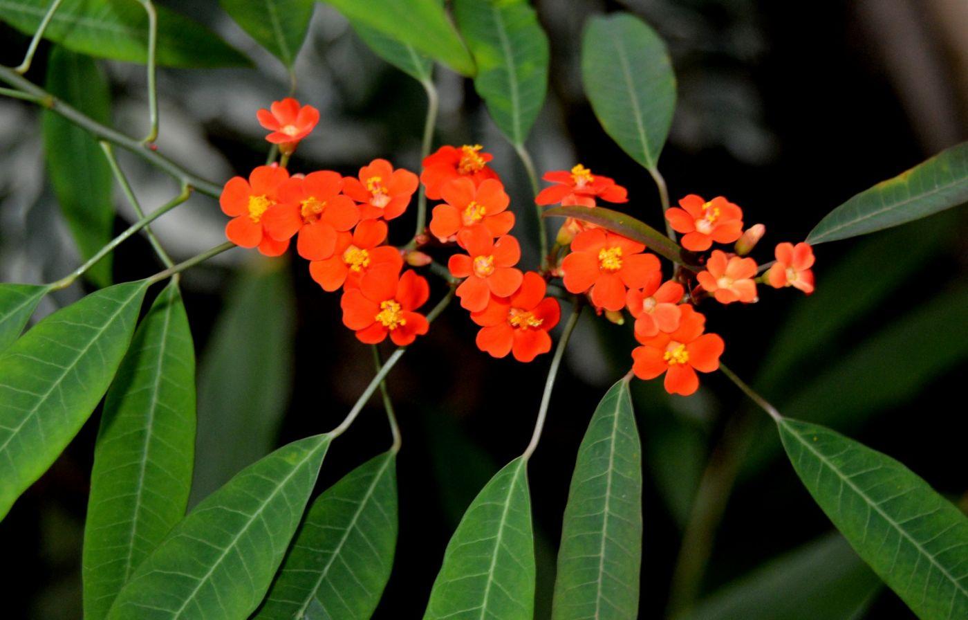 最近在溫室拍攝的花 (1)_圖1-11