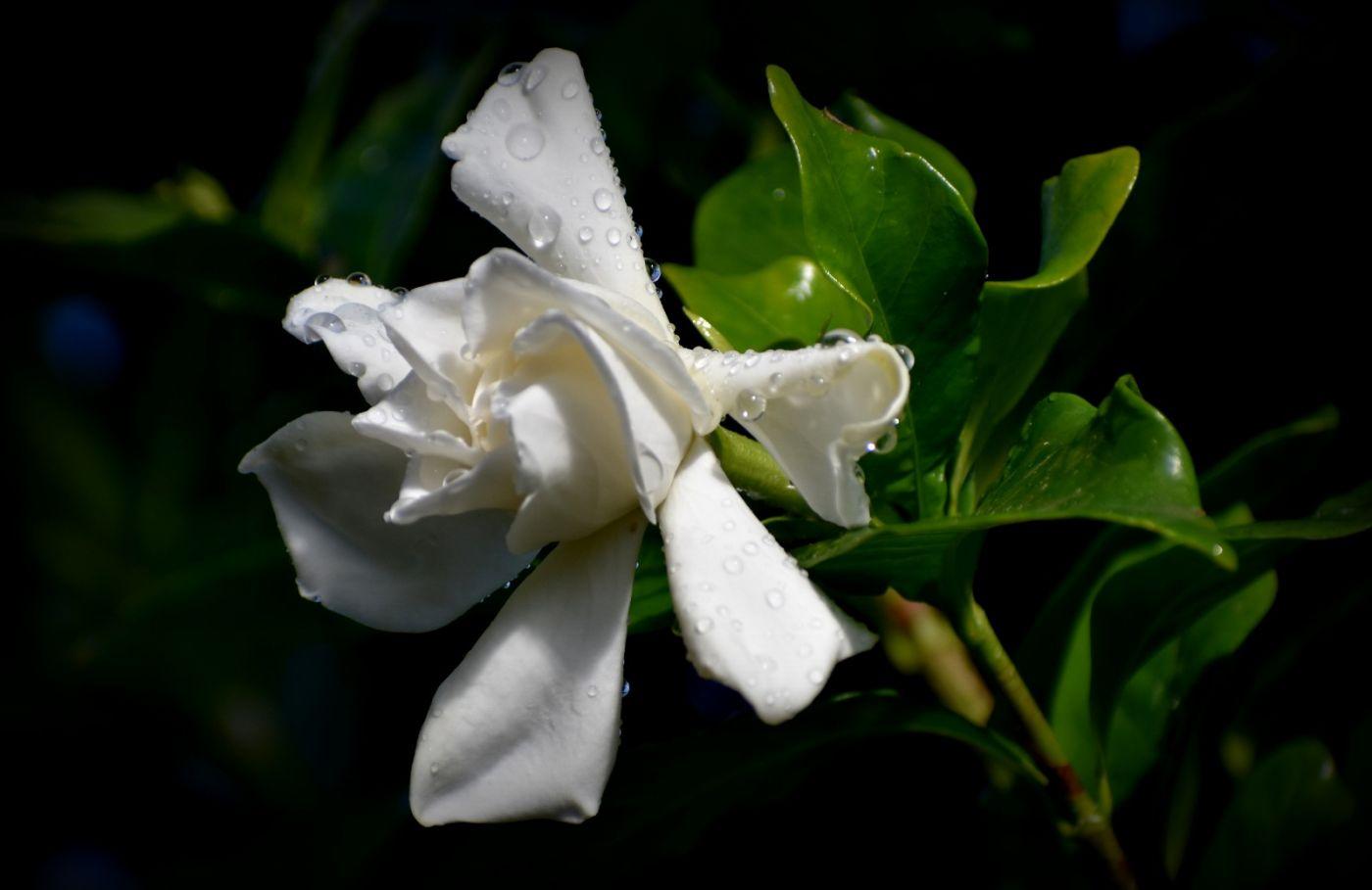 最近在溫室拍攝的花 (1)_圖1-18