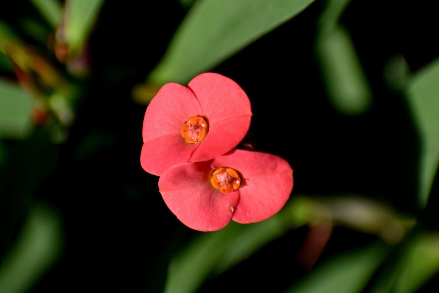 最近在溫室拍攝的花 (1)_圖1-19