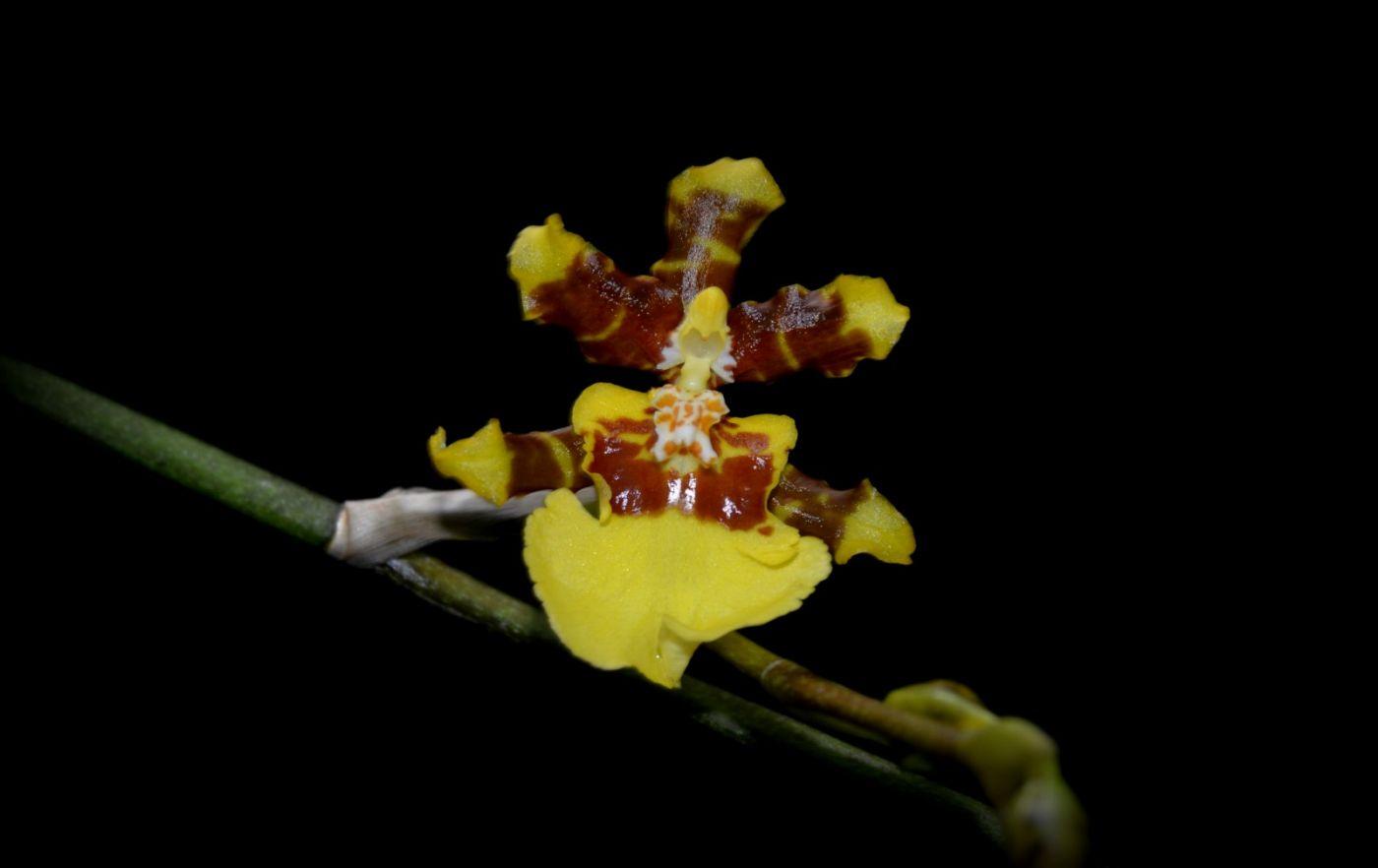 最近在溫室拍攝的花 (1)_圖1-20