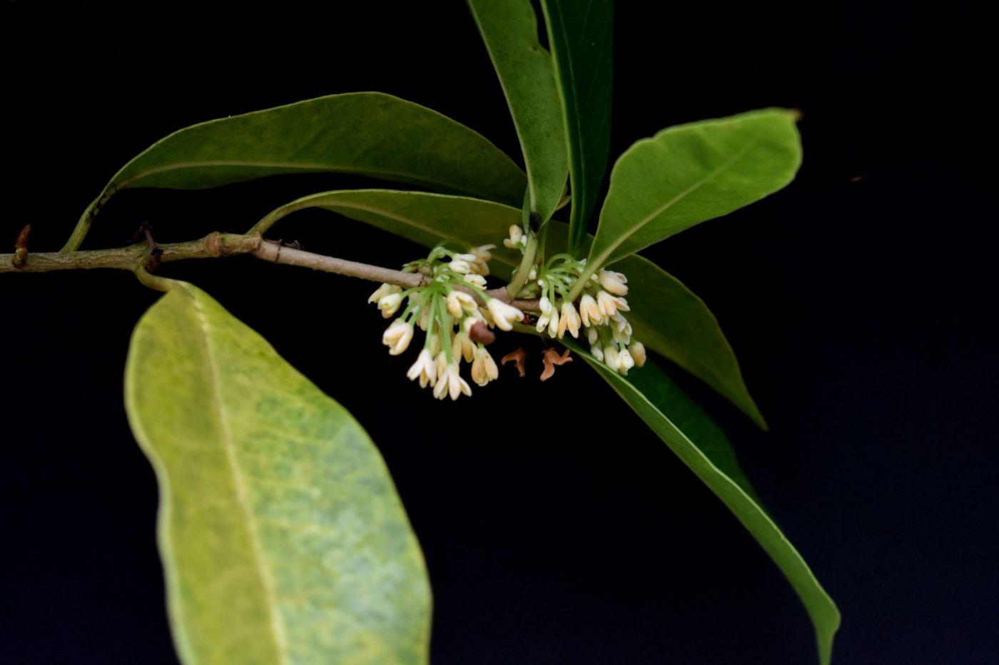 最近在溫室拍攝的花 (1)_圖1-23