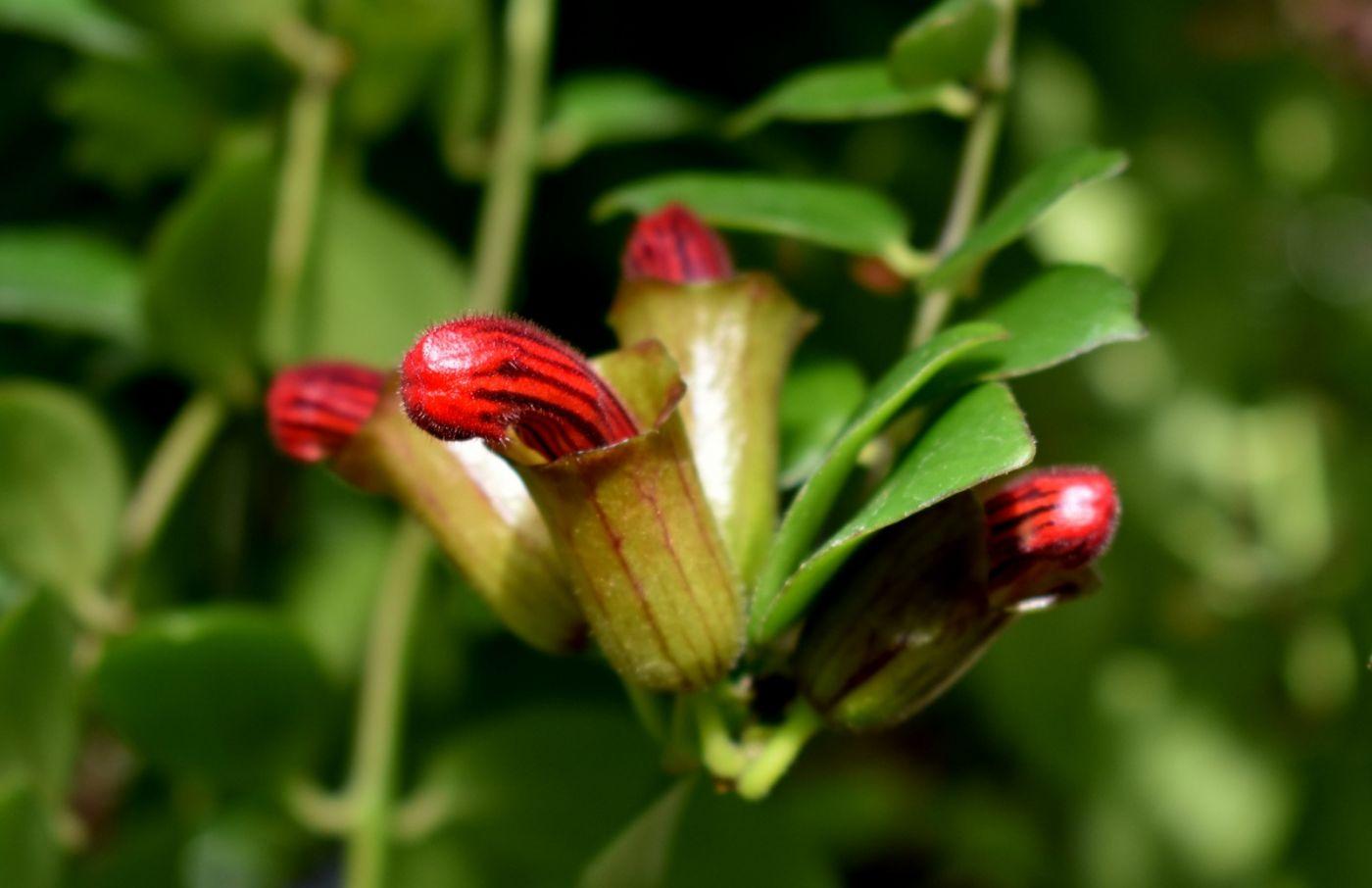 最近在温室拍摄的花 (2)_图1-2