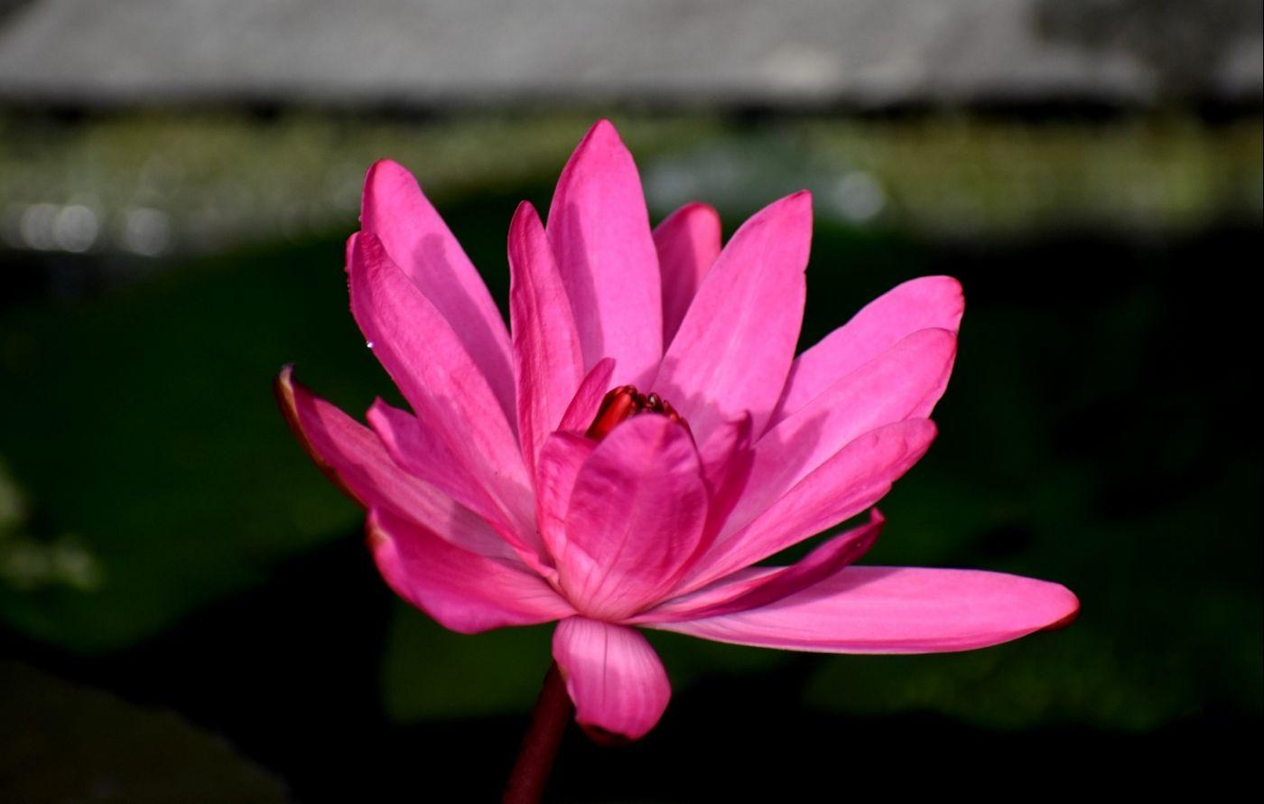 最近在温室拍摄的花 (2)_图1-4