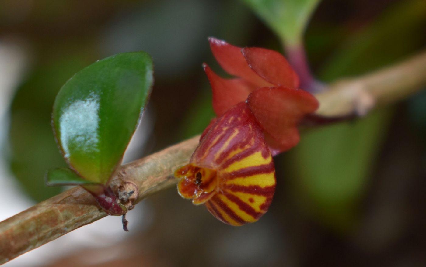 最近在温室拍摄的花 (2)_图1-8