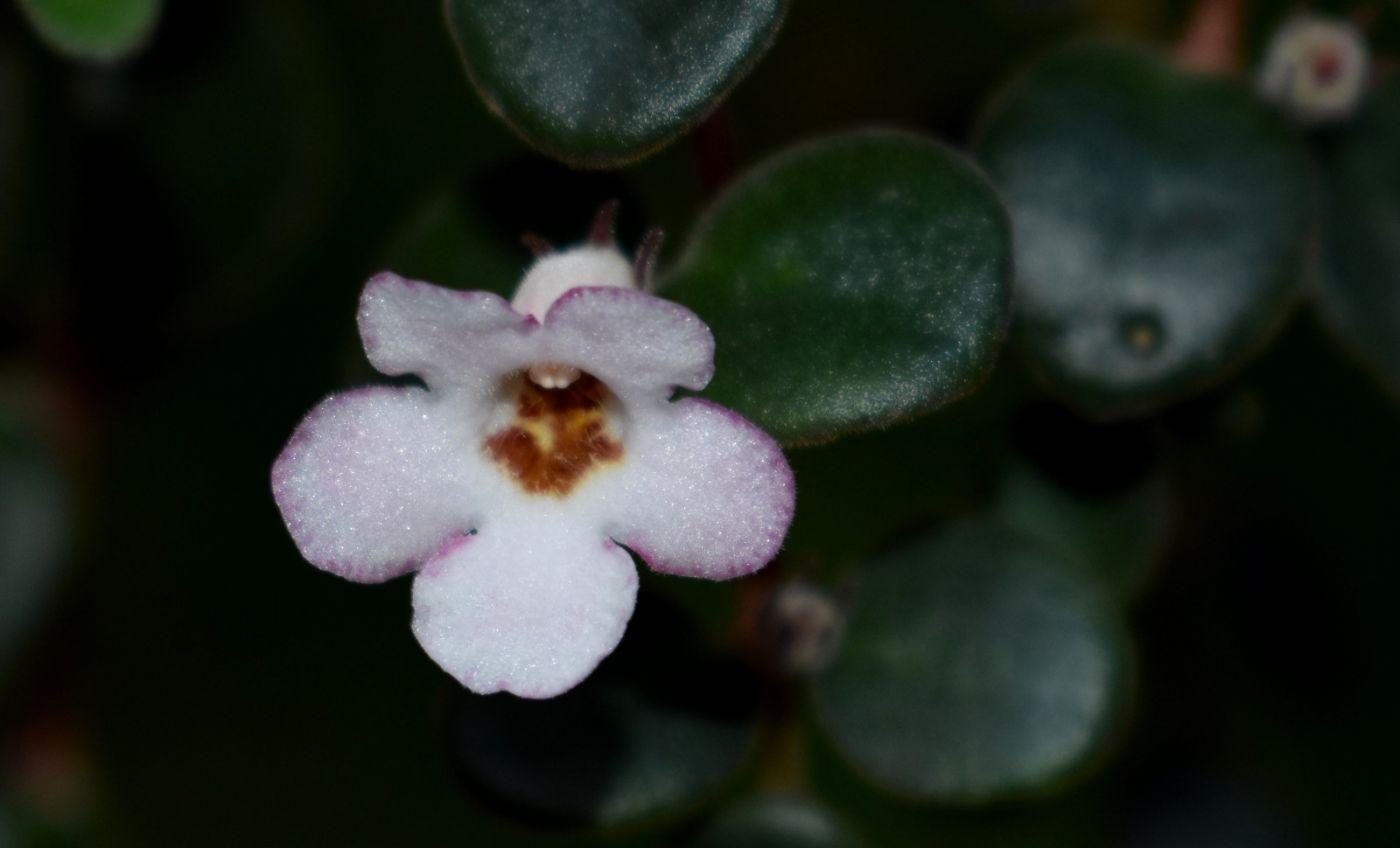 最近在温室拍摄的花 (2)_图1-9