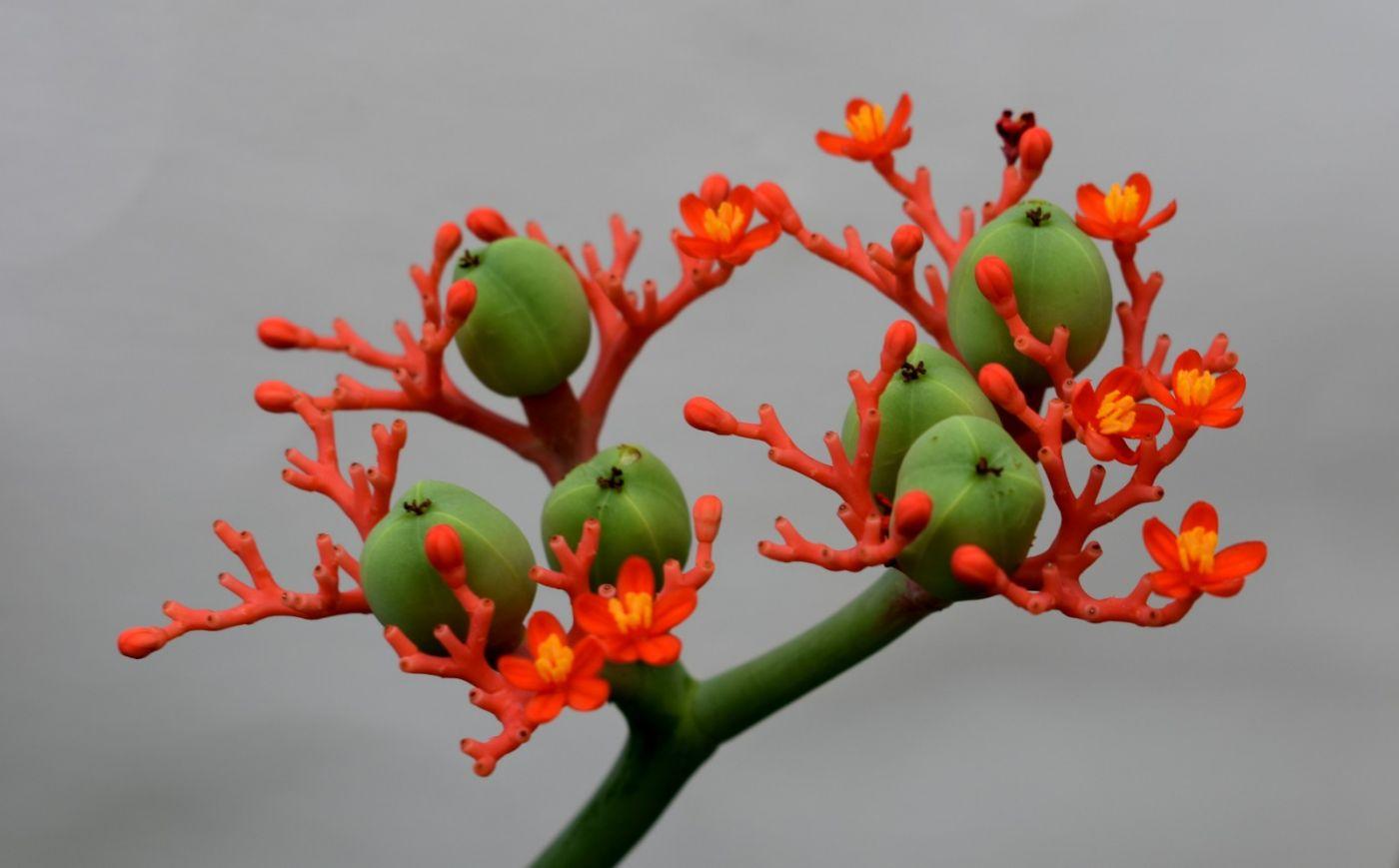 最近在温室拍摄的花 (2)_图1-16