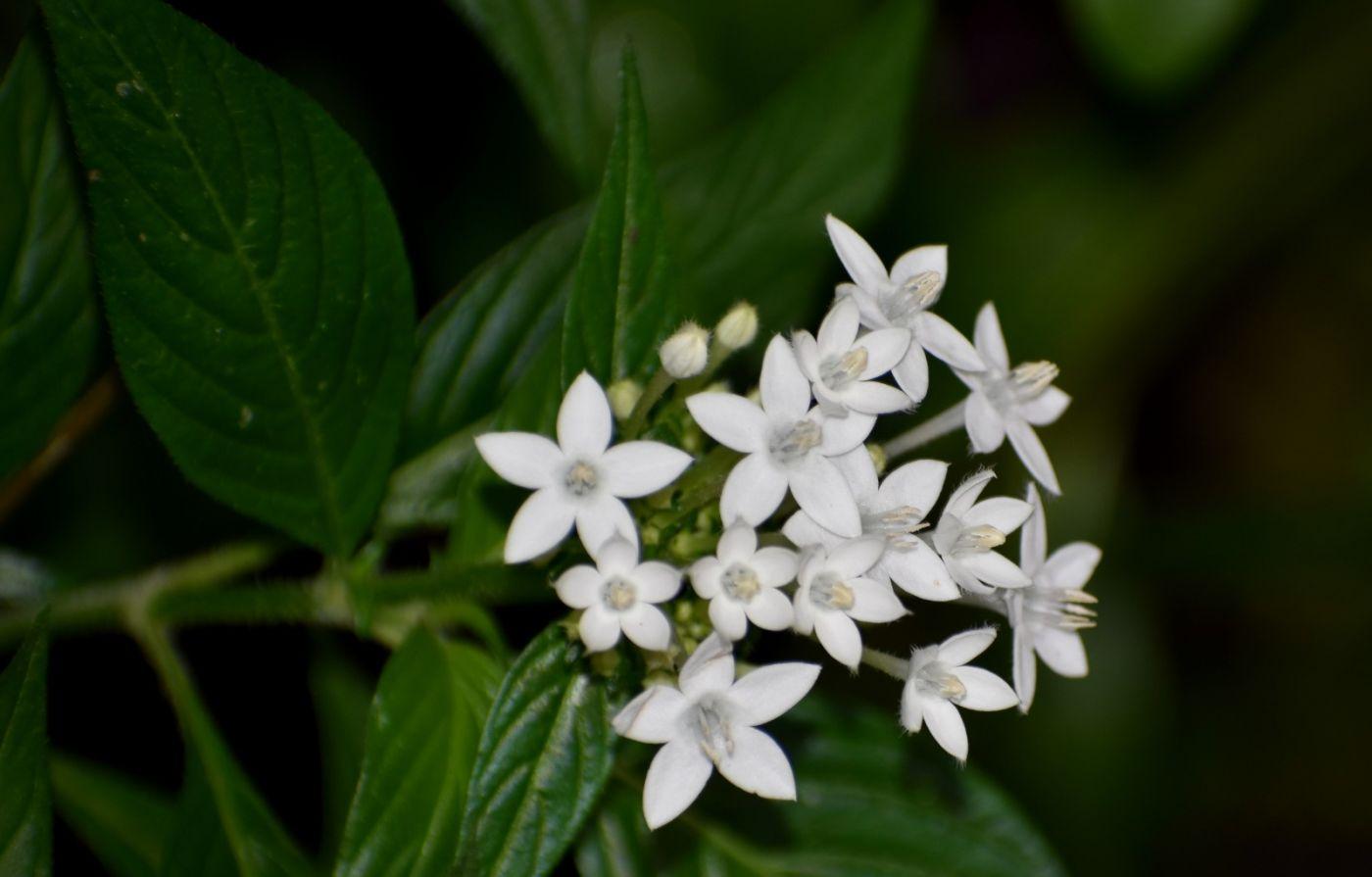 最近在温室拍摄的花 (2)_图1-18