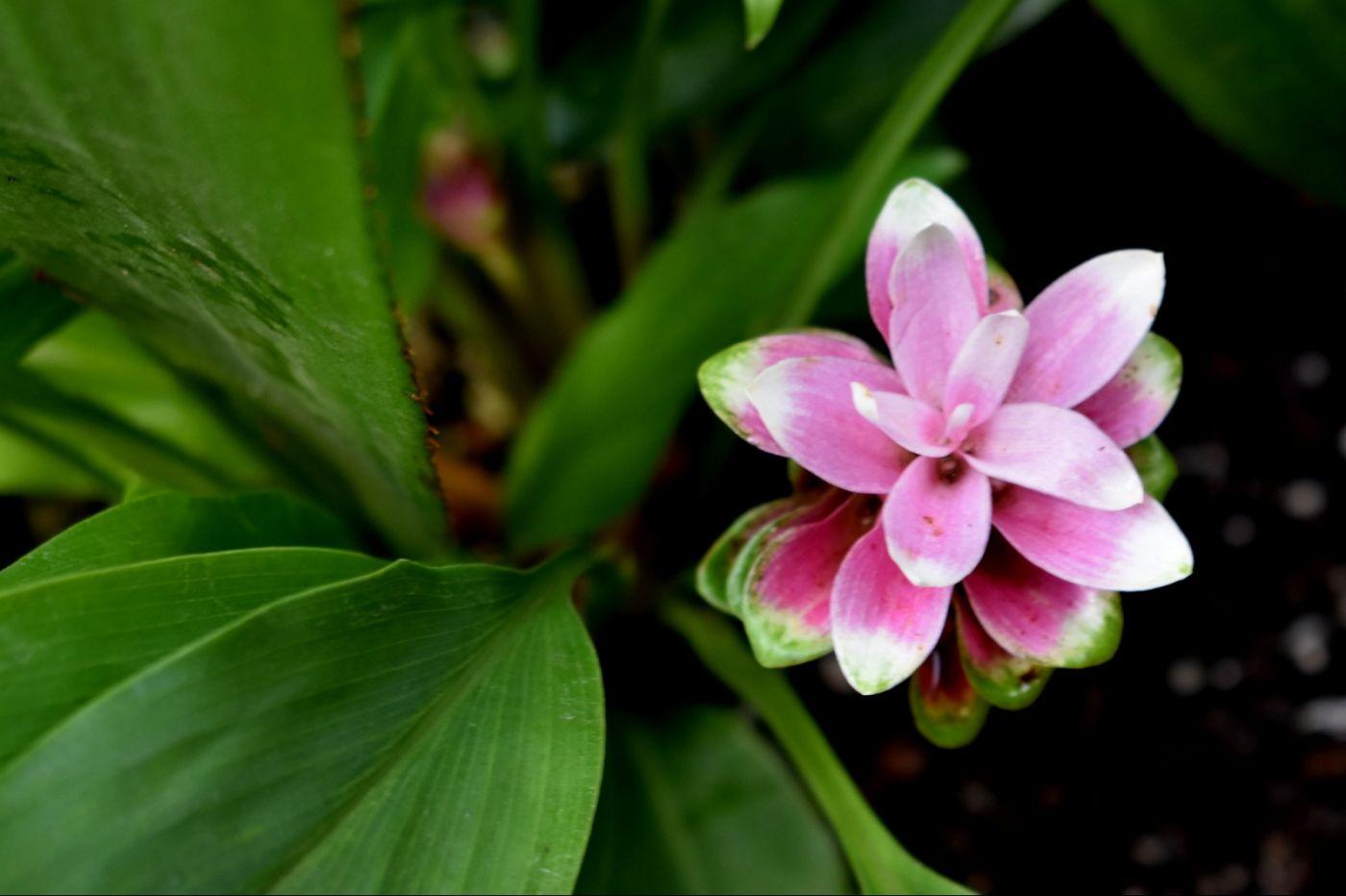 最近在温室拍摄的花 (2)_图1-26
