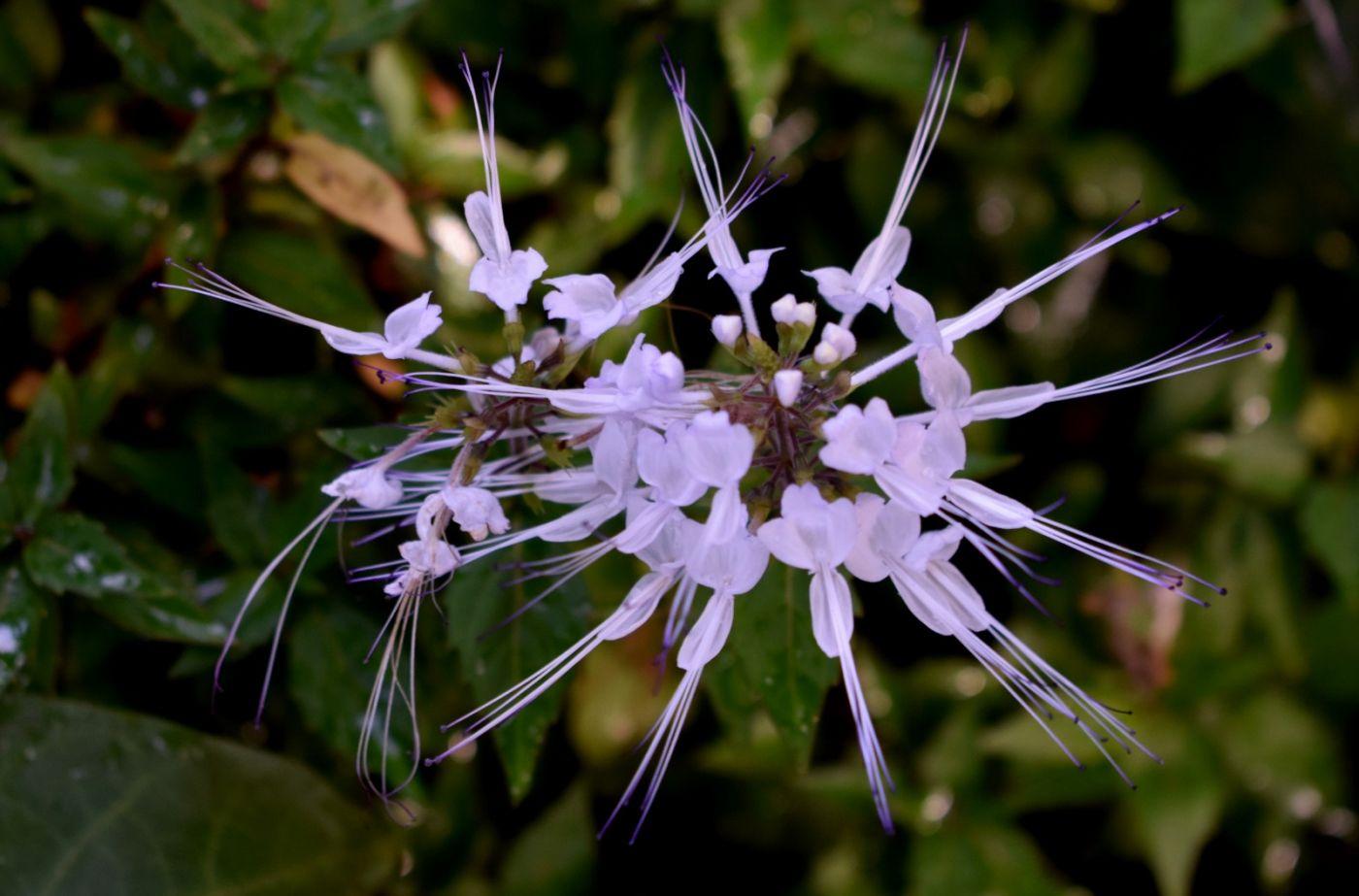 最近在温室拍摄的花 (2)_图1-27