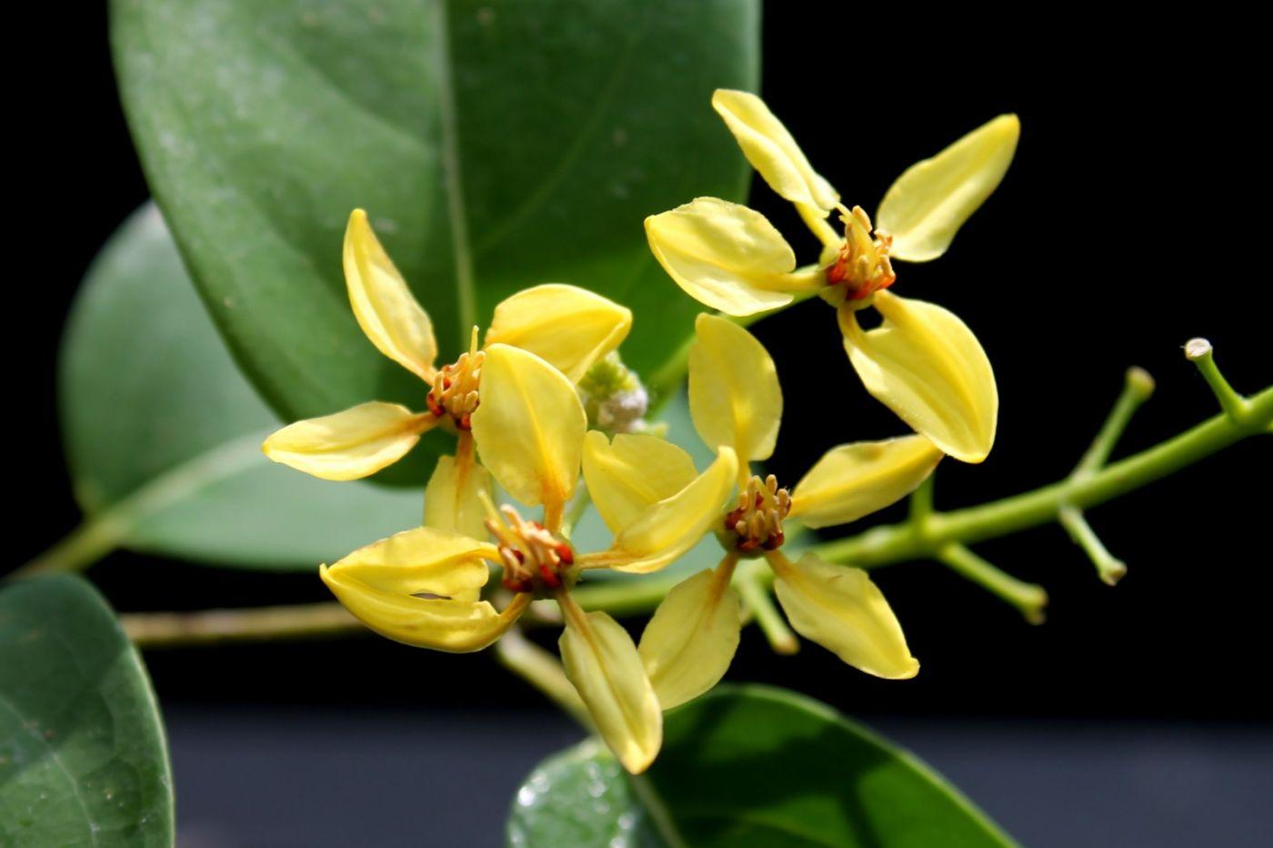 最近在温室拍摄的花 (2)_图1-30