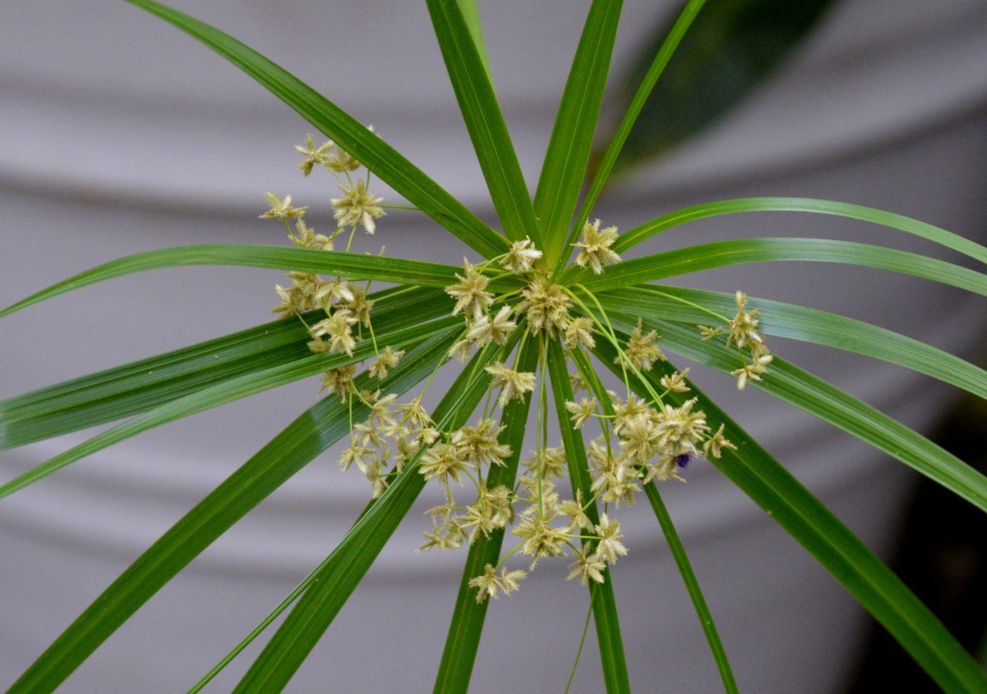 最近在温室拍摄的花 (2)_图1-32