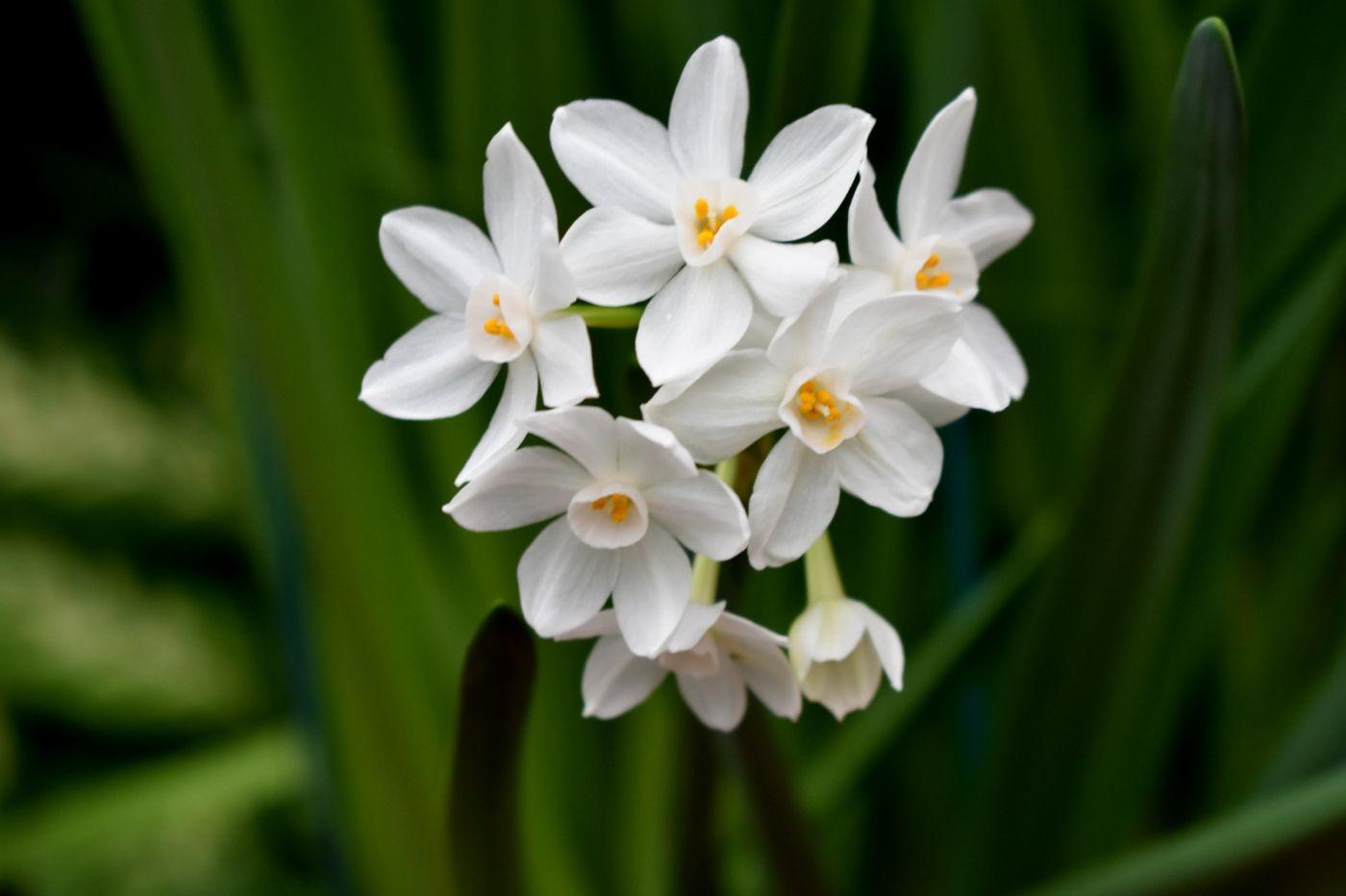 最近在温室拍摄的花 (2)_图1-34