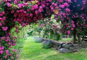 克洛斯德努依玫瑰园