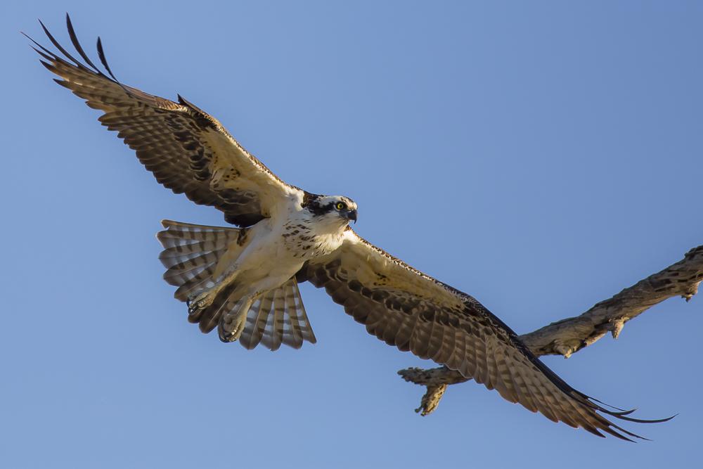 鱼鹰的风彩_图1-3