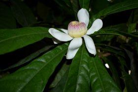 最近在温室拍摄的花