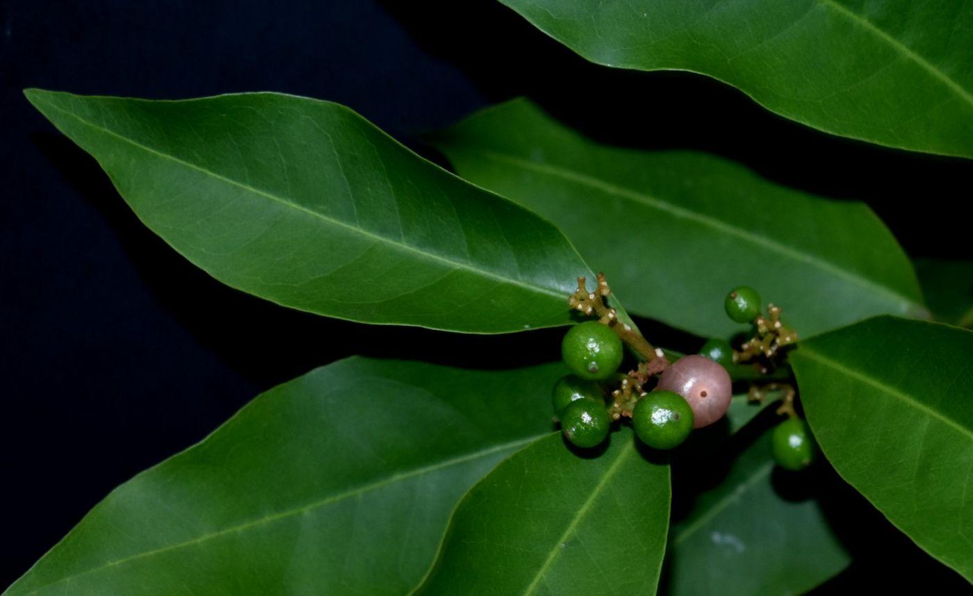 最近在温室拍摄的花 (3)_图1-4