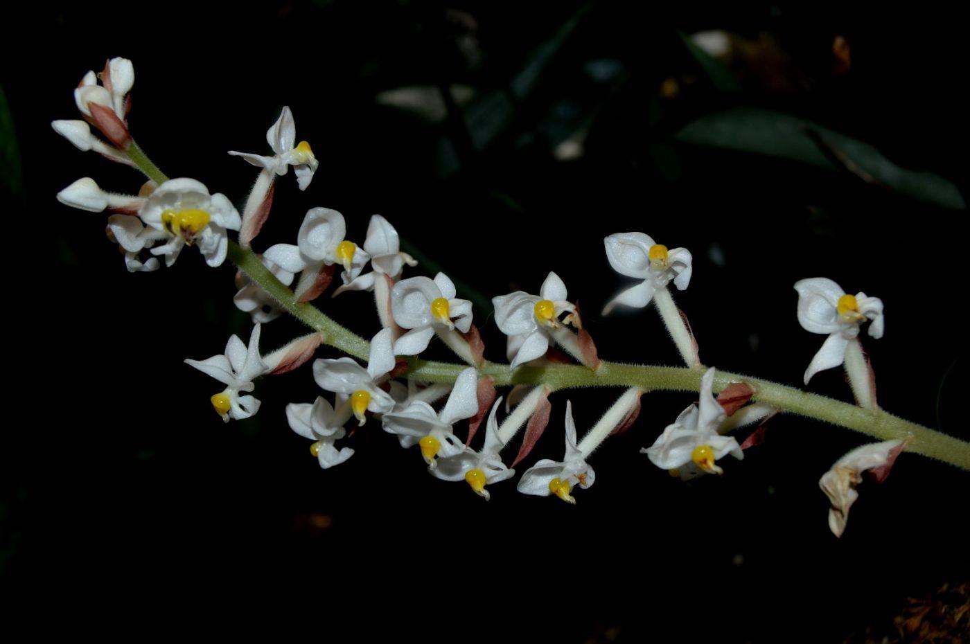 最近在温室拍摄的花 (3)_图1-12