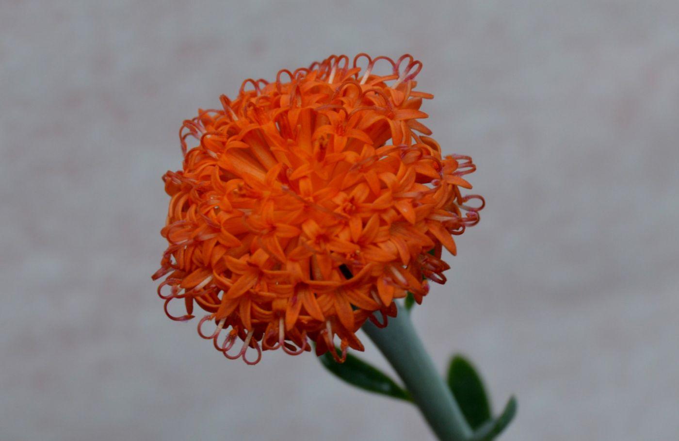 最近在温室拍摄的花 (3)_图1-17