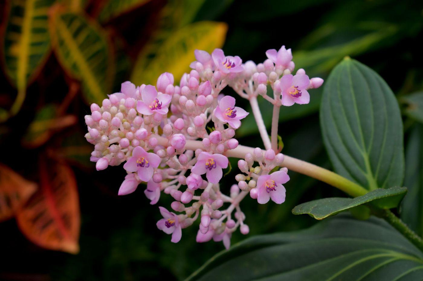 最近在温室拍摄的花 (3)_图1-18