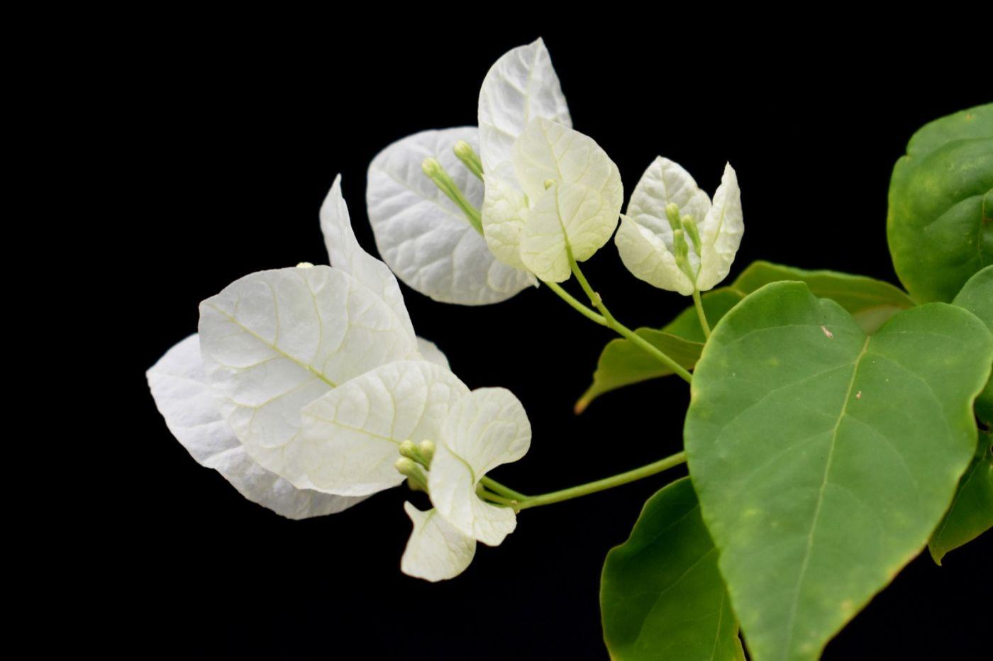 最近在温室拍摄的花 (3)_图1-21