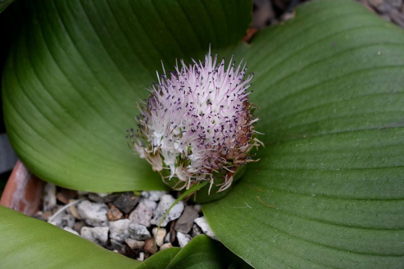 最近在温室拍摄的花 (3)_图1-22