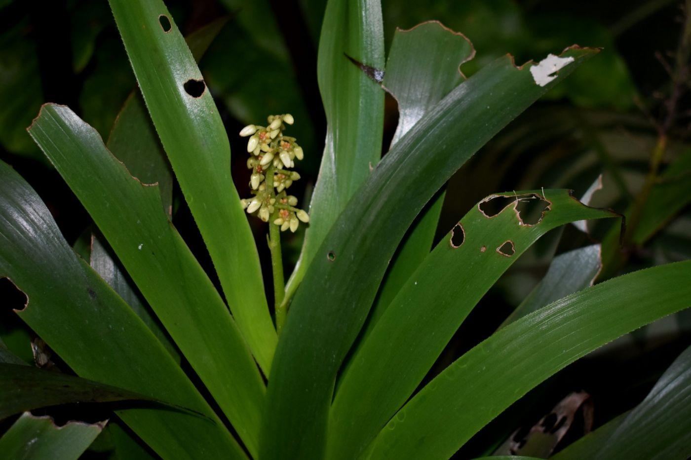 最近在温室拍摄的花 (3)_图1-27