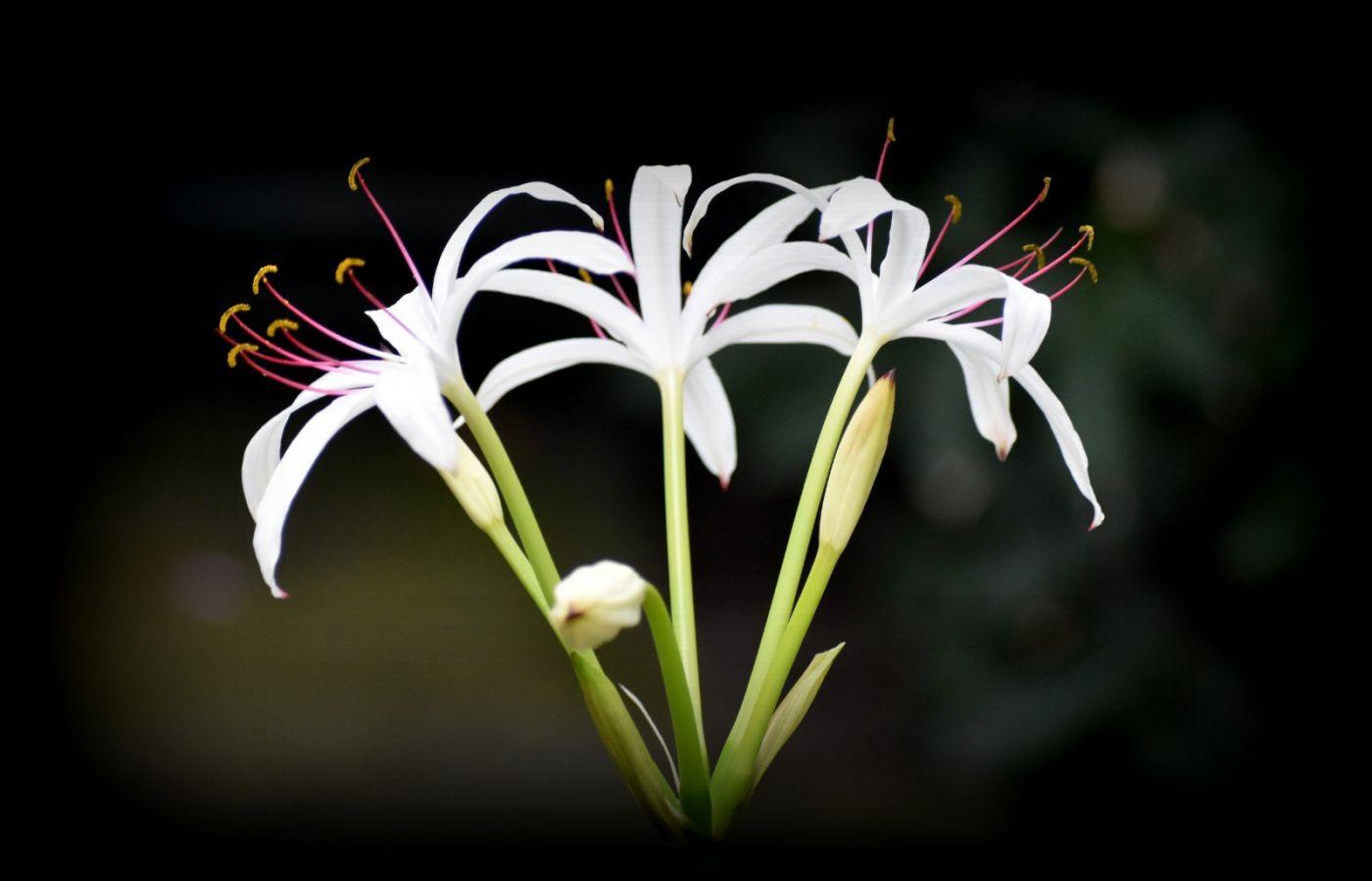 最近在温室拍摄的花 (3)_图1-33