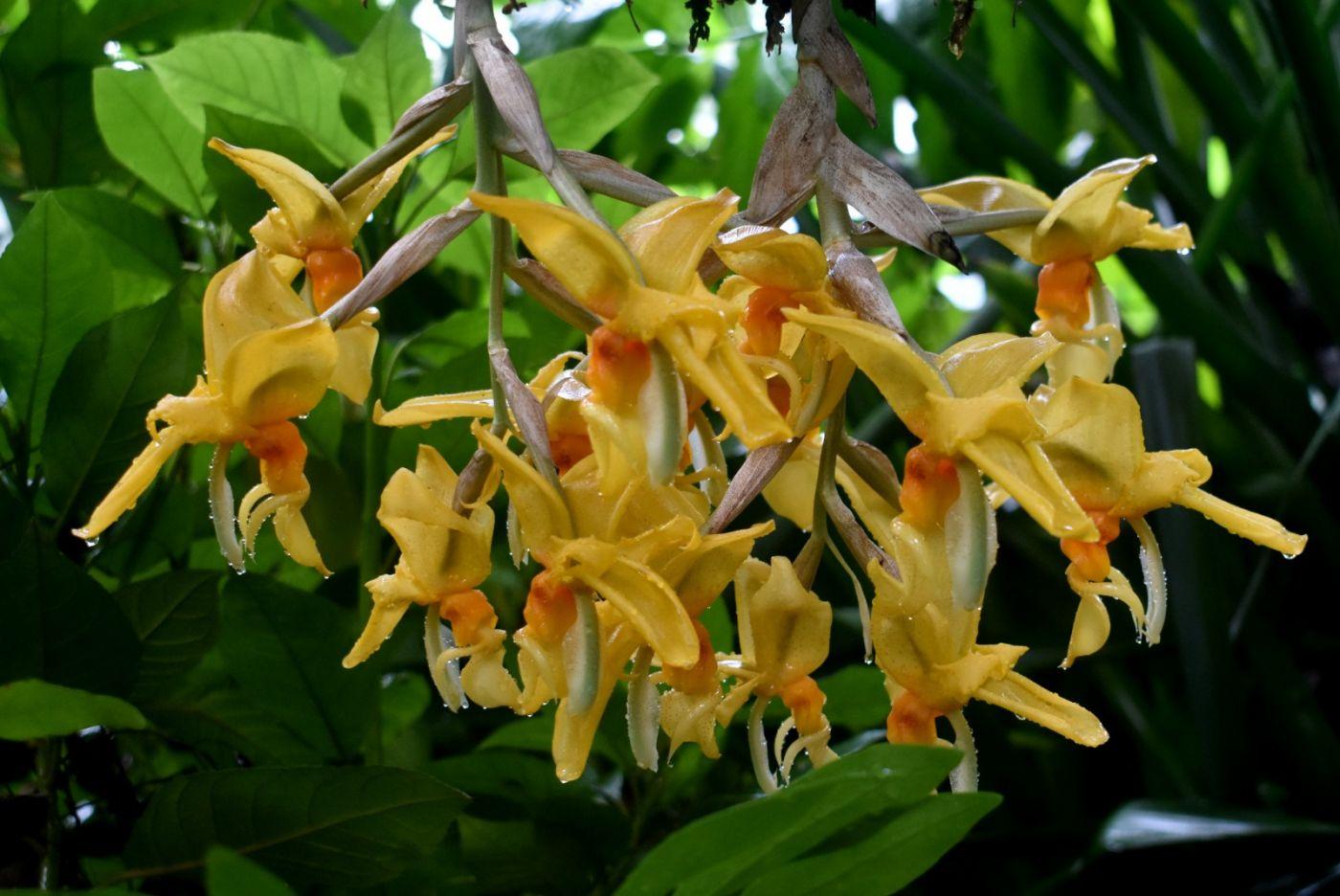 最近在温室拍摄的花 (3)_图1-35
