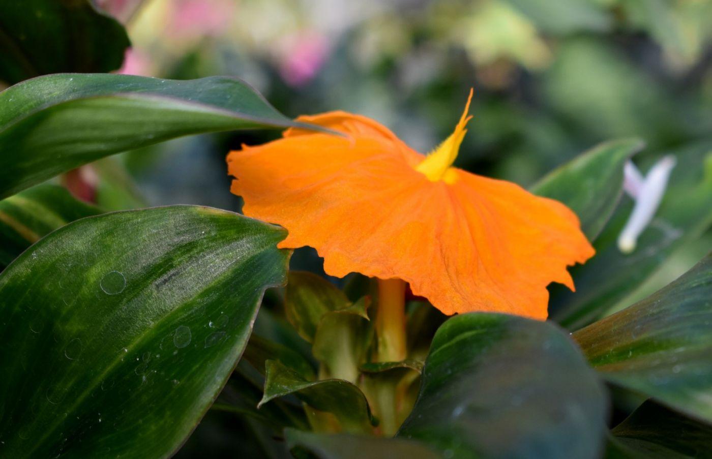最近在温室拍摄的花 (3)_图1-36