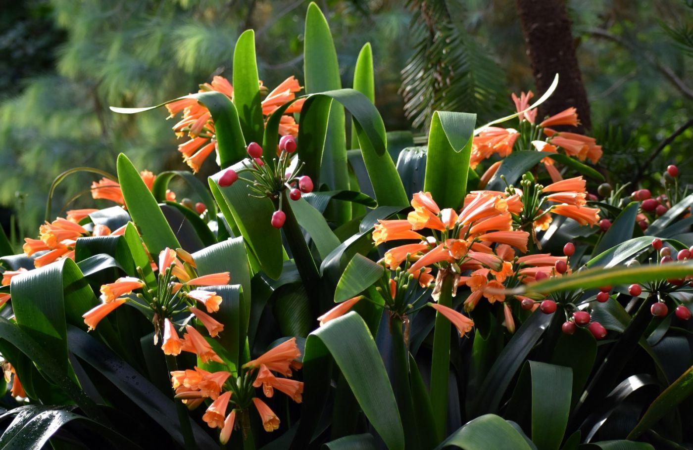 最近在温室拍摄的花 (3)_图1-38