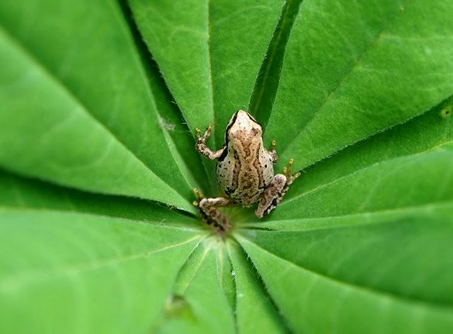 小小青蛙七月天_图1-4