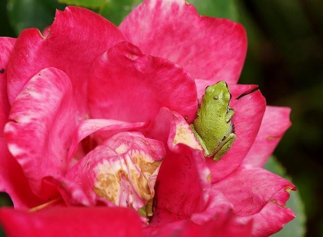 小小青蛙七月天_图1-5