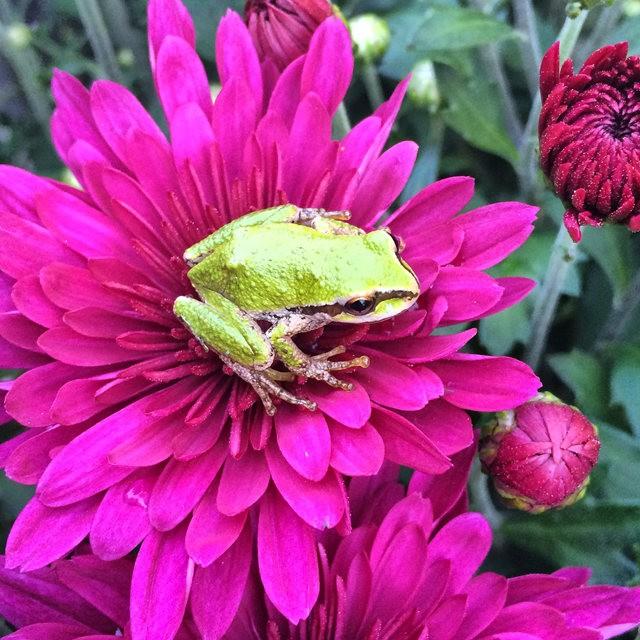 小小青蛙七月天_图1-7