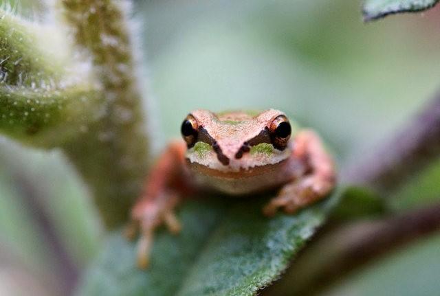 小小青蛙七月天_图1-8