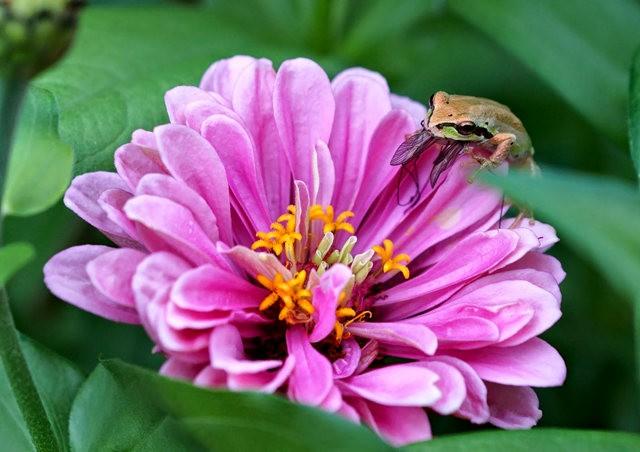 小小青蛙七月天_图1-9