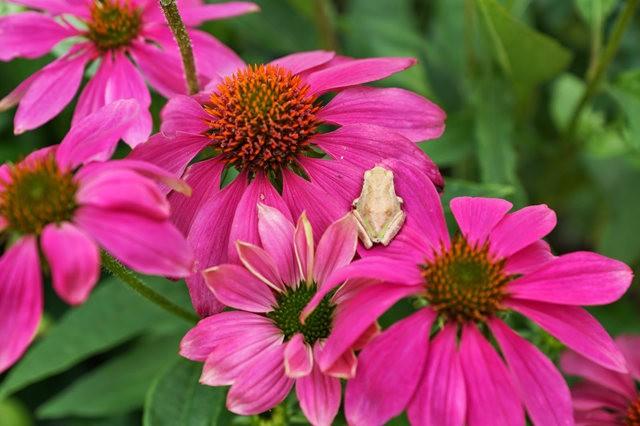 小小青蛙七月天_图1-11