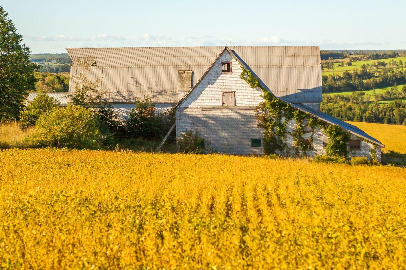 加拿大路途,安居乐业_图1-31
