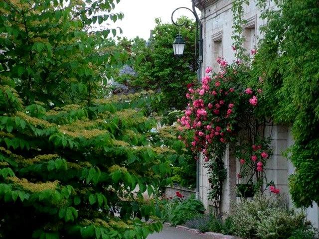 谢迪尼--法国玫瑰村_图1-4