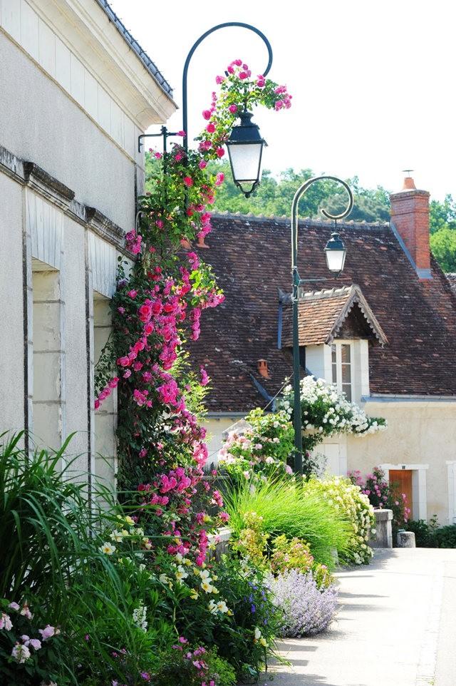 谢迪尼--法国玫瑰村_图1-5