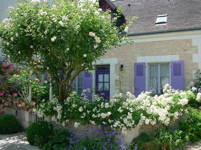 谢迪尼--法国玫瑰村_图1-6