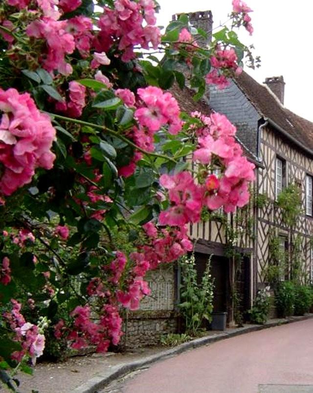 谢迪尼--法国玫瑰村_图1-7