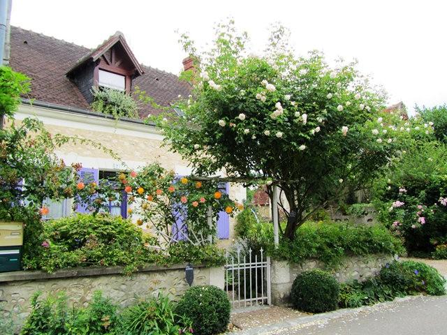 谢迪尼--法国玫瑰村_图1-12
